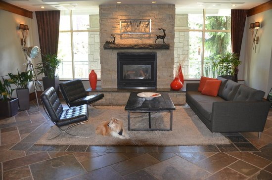 Summit Lodge Boutique Hotel: Rusty enjoying the lobby in the Summit Lodge