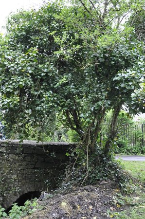 The Abbey Mill: bridge