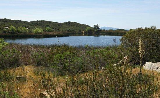 Daley Ranch: Still pond