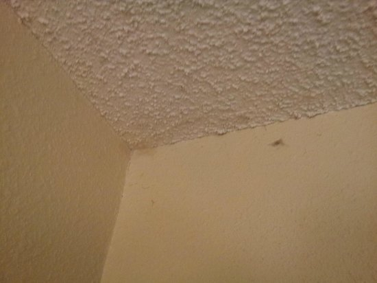 Extended Stay America - Des Moines - West Des Moines: Cobwebs in corner of bed area.