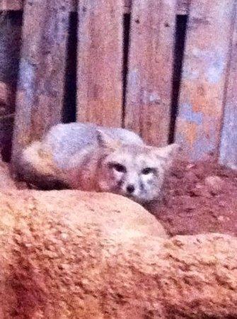 Abilene Zoo Photo