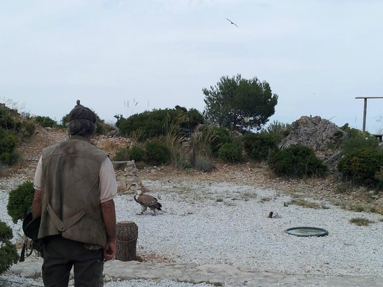 Garden of Eagles (Jardin de Las Aguilas): Griffon vultures on ground and in air