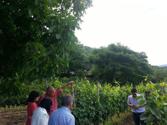 B-Winemaker : visit of the vineyard