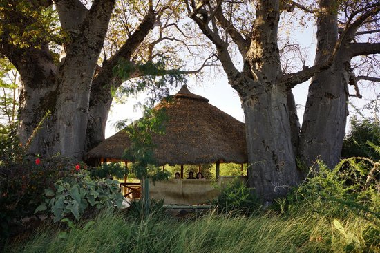 Ol Mesera Tented Camp: Amidst the baobabs