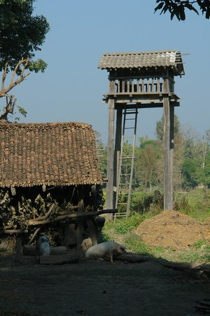 Forest Hideaway Hotel & Cottages: watch towers tharu people use to chase animals away from their crop fields