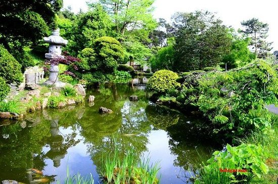 koi pond miniature pagoda garden picture of japanese