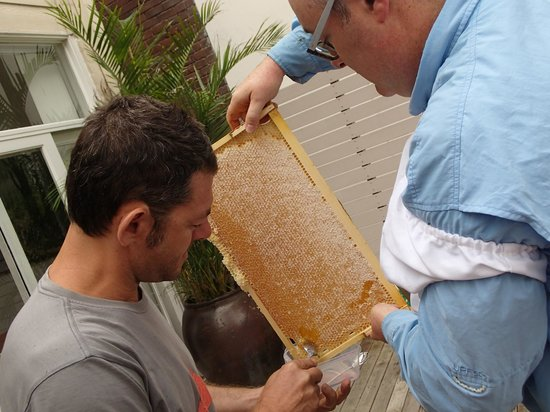 Bondi Beach Eco Garden: Collecting honey to sample from our backyard hives
