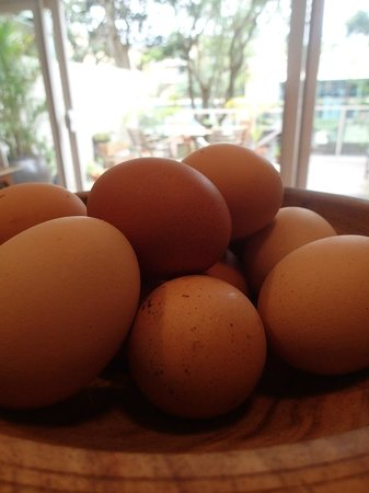 Bondi Beach Eco Garden: Fresh free range eggs from our backyard chooks