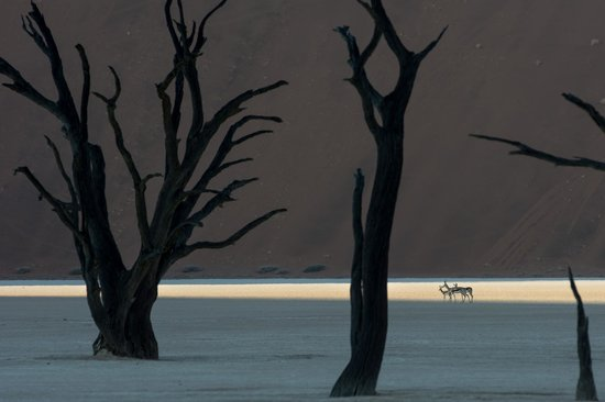 ‪‪Sesriem‬, ناميبيا: Springbok in Deadvlei‬