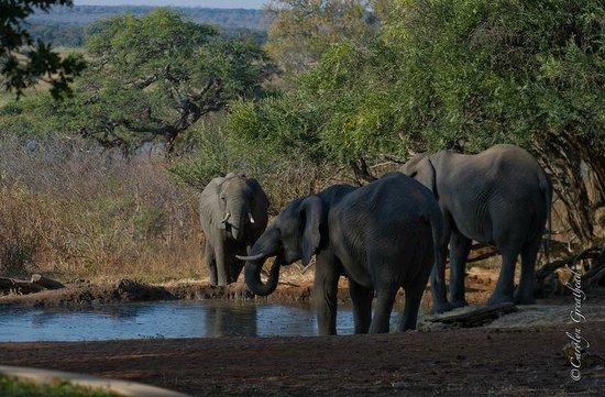 Imbabala Zambezi Safari Lodge: Elephants at play