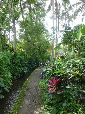 Mulawarman Ubud Bali: Pathway to guesthouse