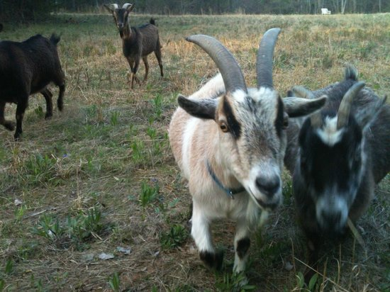 Tanglewood Farm Miniatures: my lovable Tanglewood babies always looking for love