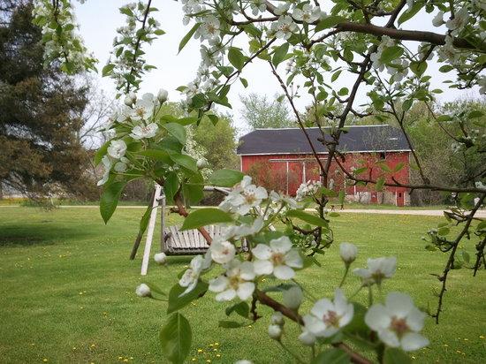 Apple Tree Lane Bed & Breakfast: Historic barn & outbuildings