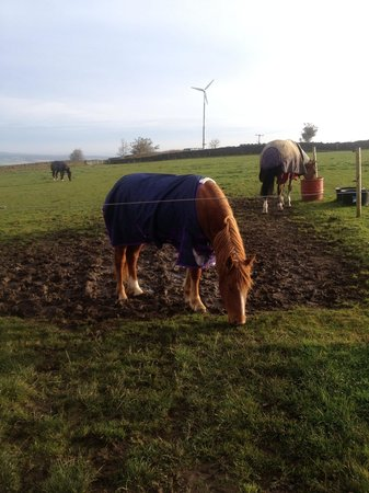Moorwood Equine