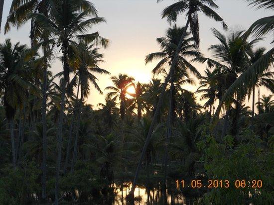 Estuary Island: Good Morning :)