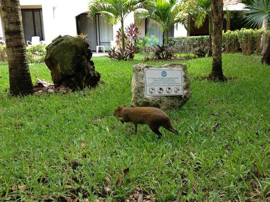 Viva Wyndham Maya : Random Animal