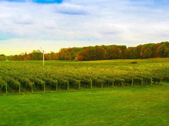 Ferrante Winery & Restaurante, Harpersfield Ohio