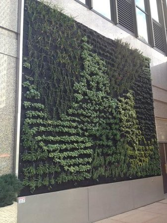 Sheraton Denver Downtown Hotel: living garden wall outside the Sheraton Downtown Denver - so cool! I guess it doesn't use any so