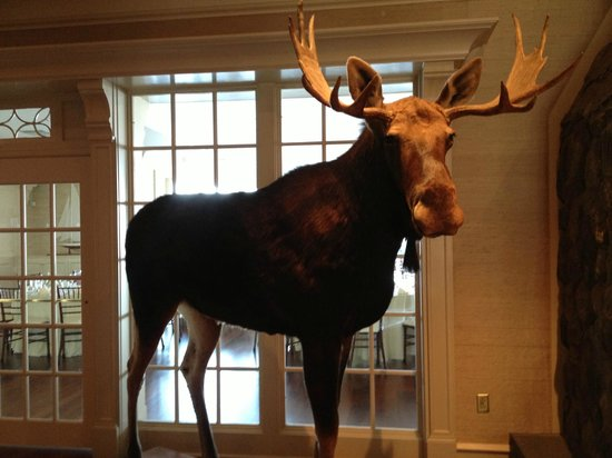 Point Lookout Resort: Moose at the wedding venue