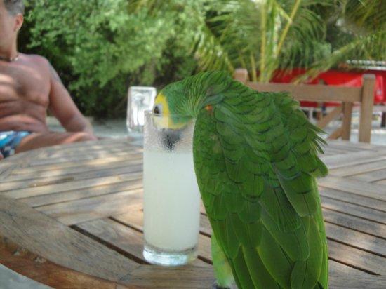 Paradise Island Resort & Spa: Mittrinker Beachbar