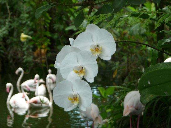 Bali Bird Park: Piekna orchidea rosnąca na drzewie
