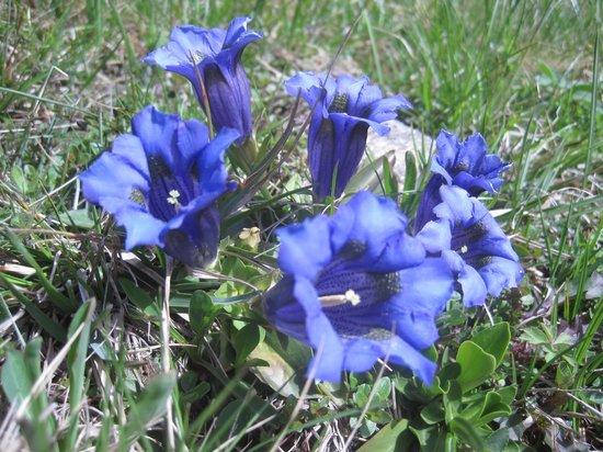 Bischofhütten: Ja ja so blau, blau, blau...
