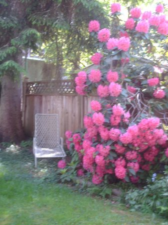 Cambie Lodge Bed & Breakfast: Back garden, early spring