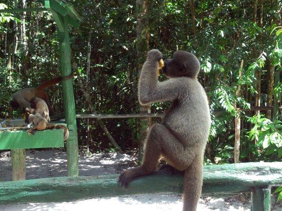 Amazon Ecopark Jungle Lodge: ECOPARK Manaus 10