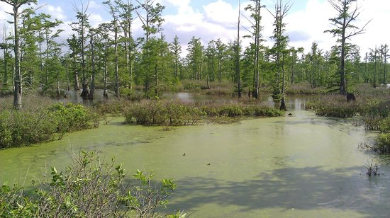 Cache River State Natural Area: Swamp