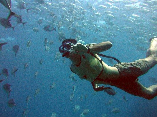 Aguila de Osa Inn: snorkeling Cano Island