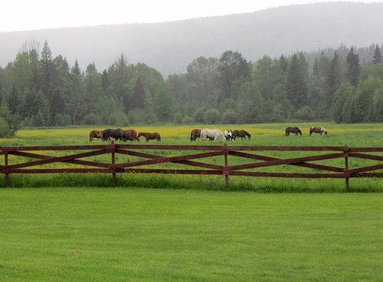 Wells Gray Guest Ranch: View from our veranda
