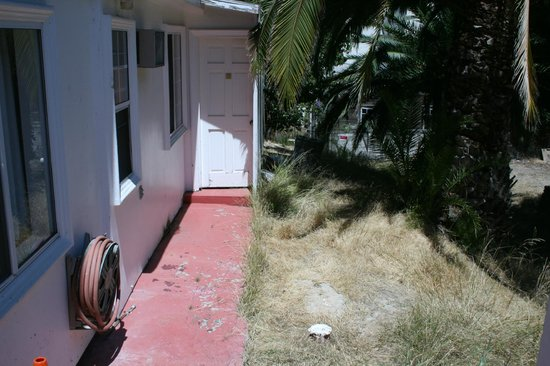 Catalina Boat House : Dead grass & weeds outside guest room door