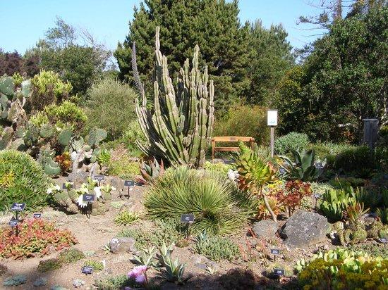 Cactus garden picture of mendocino coast botanical - Mendocino coast botanical gardens ...