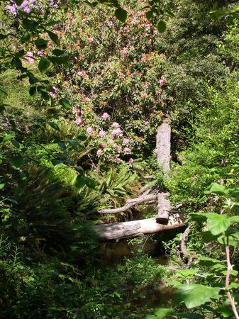Mendocino Coast Botanical Gardens: Woodsy trail