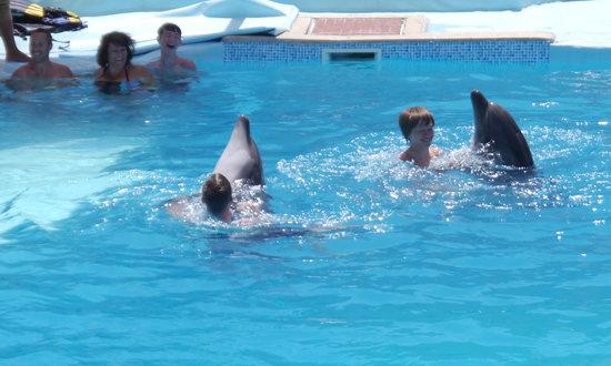 Dolphina Park