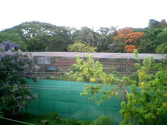 Sai Onella Guest House: View of zoo from the balcony