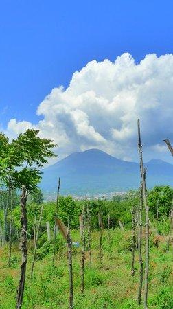 Mercure Napoli Angioino Centro : Vesuvius from Pompei