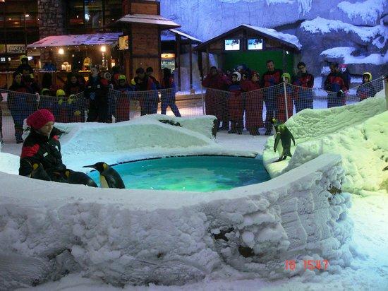 Ski Dubai: Penguin show