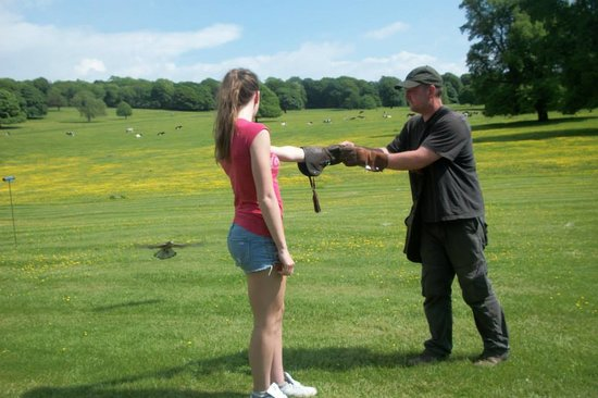 Yealand Conyers, UK: Birdhandling with Jim