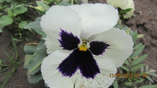 Hotel Rishi Palace : flower in garden of hotel