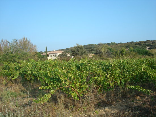 Maison d'Hotes Vic : nos vignes
