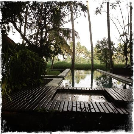 Bali T House: pool looking over paddies