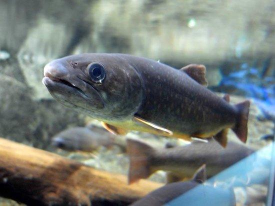 Saitama Aquarium: 色々な淡水魚が見られる。