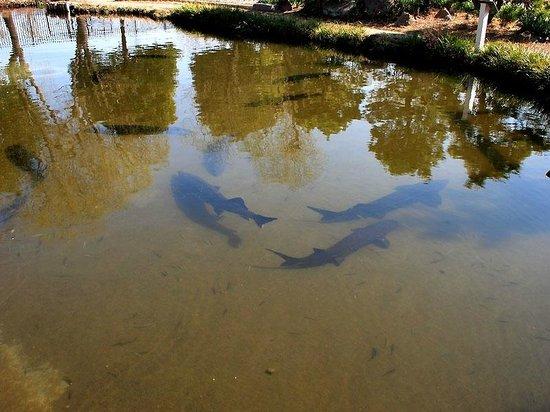 Saitama Aquarium: チョウザメのプールがリニューアル。