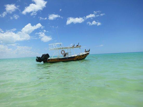 Holbox Hotel Casa las Tortugas - Petit Beach Hotel & Spa: Whale Shark tour boat