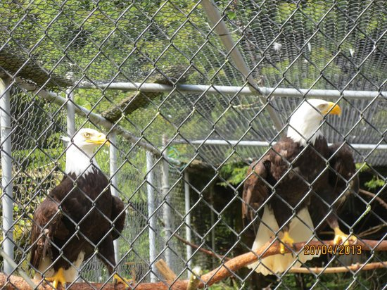 Ferndale, WA: Sardes Raptor Center