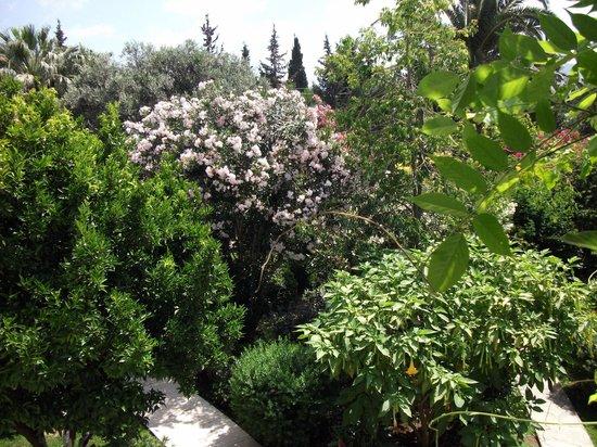 Hotel Karia Princess: Garden