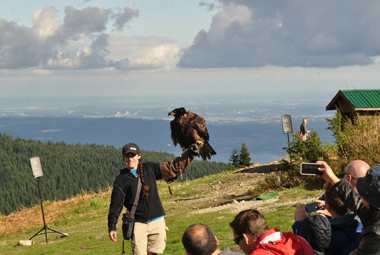 Grouse Mountain: Bird show 1