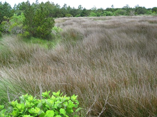 Hammock Hills Nature Trails: Marshy land to the east