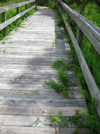 Hammock Hills Nature Trails Ocracoke 2019 All You Need